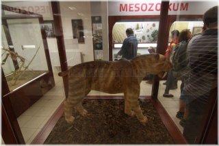 Chlupáčovo muzeum historie země