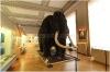 Národní muzeum - Antropologická expozice