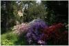 Praha 2 - Botanická zahrada Přírodovědecké fakulty UK