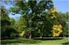 Královská obora - Stromovka - Červený dub