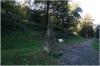 Pražský hrad - Jelení příkop - Pyramidální trpaslík