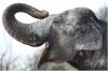 ZOO Praha - Slon indický