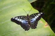 Výstava Motýli v Botanické zahradě