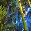 Fata Morgana - Džungle, která nespí