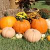 Halloween - dlabání dýní