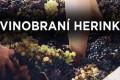 Vinobraní Herink 4. ročník