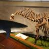 Komentovaná prohlídka expozice Archa Noemova