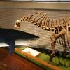 Přírodovědecké muzeum - Co dělají exponáty v noci?