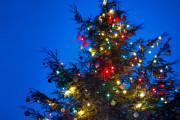 Advent v Zoo Praha - rozsvícení vánočního stromu