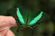 Motýlí cestovatelé ve Fata Morganě trojské botanické zahrady