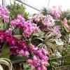 Výstava orchidejí v Botanické zahradě Praha