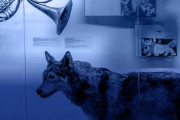 Online výstava - Hudební zvěřinec