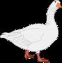 goose-148806_1280