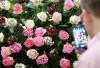Výstava Svět růží