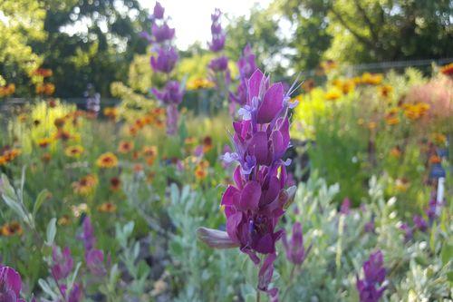 Americke leto v Botanicke zahrade01