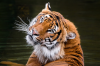Mezinarodni den tygru v Zoo