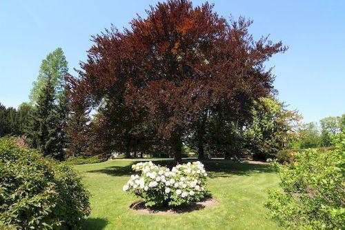 Pha1_ Prazsky hrad-Kralovska zahrada20180429_001