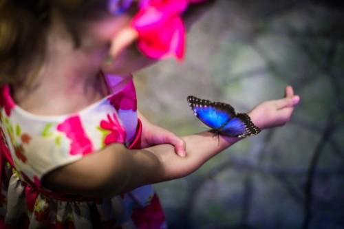 galerie-nasich-motylu-1