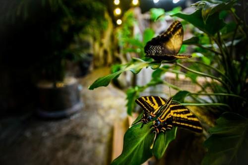papilonia-motyli-dum-c68