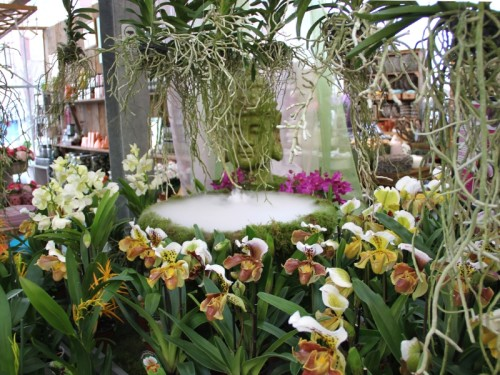 vystava-orchideji-1543