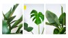 Summer_Plant